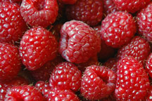 red raspberries - macro photo